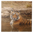 Royal Bengal Tiger in the jungle pond, 2 Tile