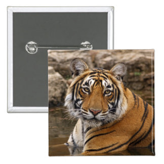 Royal Bengal Tiger in the jungle pond, Button