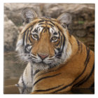 Royal Bengal Tiger in the jungle pond, Ceramic Tile