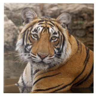Royal Bengal Tiger in the jungle pond, Ceramic Tile