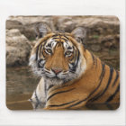Royal Bengal Tiger in the jungle pond, Mouse Pad