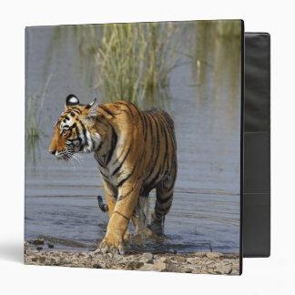 Royal Bengal Tiger in the Rajbagh Lake, 3 Ring Binder