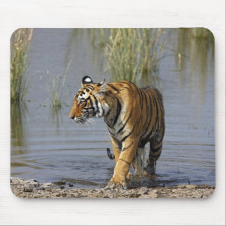 Royal Bengal Tiger in the Rajbagh Lake, Mouse Pad