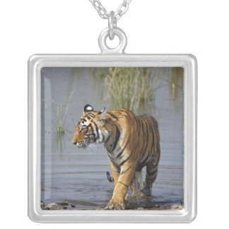 Royal Bengal Tiger in the Rajbagh Lake, Silver Plated Necklace