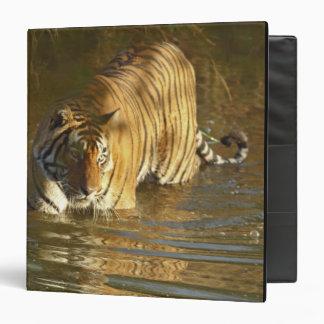 Royal Bengal Tiger in water, Ranthambhor Binder