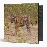 Royal Bengal Tiger moving around the bush, 3 Ring Binder