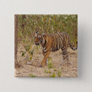Royal Bengal Tiger moving around the bush, Button