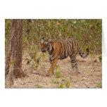 Royal Bengal Tiger moving around the bush, Greeting Card