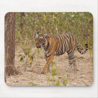 Royal Bengal Tiger moving around the bush, Mouse Pad