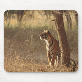Royal Bengal Tiger on look out for prey, Mouse Pad