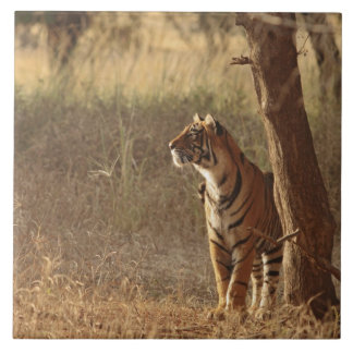 Royal Bengal Tiger on look out for prey, Ceramic Tiles