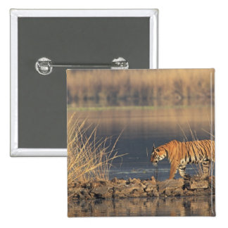 Royal Bengal Tiger on the move, Ranthambhor 2 Pinback Buttons