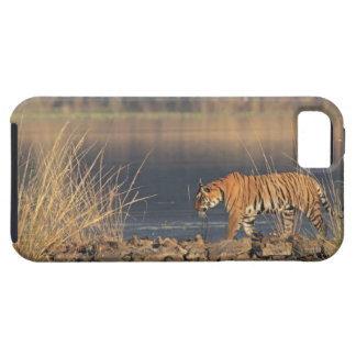 Royal Bengal Tiger on the move, Ranthambhor 2 iPhone SE/5/5s Case