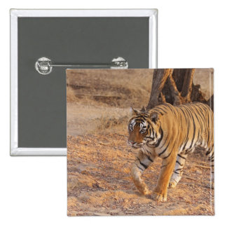 Royal Bengal Tiger on the move, Ranthambhor Pinback Buttons