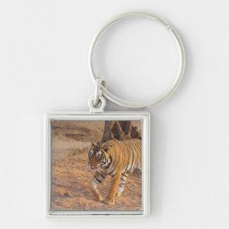 Royal Bengal Tiger on the move, Ranthambhor Keychain