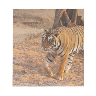 Royal Bengal Tiger on the move, Ranthambhor Note Pads