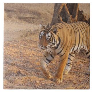 Royal Bengal Tiger on the move, Ranthambhor Tile