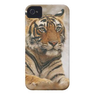 Royal Bengal Tiger on the rock, Ranthambhor iPhone 4 Case