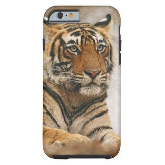 Royal Bengal Tiger on the rock, Ranthambhor Tough iPhone 6 Case