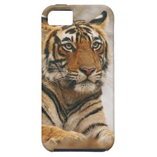 Royal Bengal Tiger on the rock, Ranthambhor iPhone SE/5/5s Case