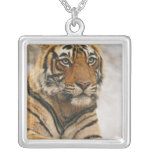 Royal Bengal Tiger on the rock, Ranthambhor Square Pendant Necklace