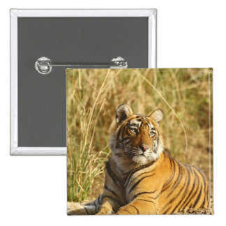 Royal Bengal Tiger outside the grassland, Button