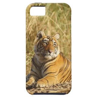 Royal Bengal Tiger outside the grassland, iPhone SE/5/5s Case