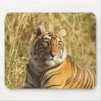 Royal Bengal Tiger outside the grassland, Mouse Pad