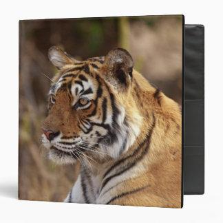Royal Bengal Tiger, Ranthambhor National Park, 2 Binder