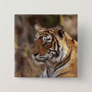 Royal Bengal Tiger, Ranthambhor National Park, 2 Button