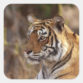 Royal Bengal Tiger Ranthambhor National Park 2 Stickers