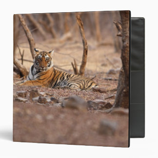 Royal Bengal Tiger, Ranthambhor National Park, 3 Ring Binder