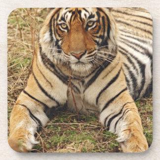 Royal Bengal Tiger, Ranthambhor National Park, Drink Coaster