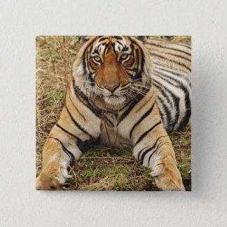 Royal Bengal Tiger, Ranthambhor National Park, Pinback Button