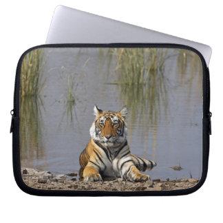 Royal Bengal Tiger sitting in the Rajbagh Lake, Laptop Sleeve