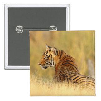 Royal Bengal Tiger sitting outside grassland, 2 Button