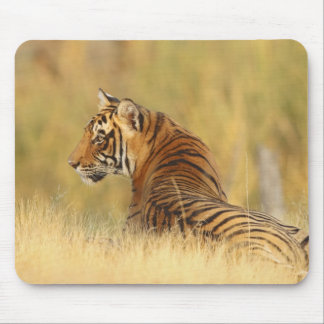 Royal Bengal Tiger sitting outside grassland, 2 Mouse Pad