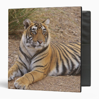 Royal Bengal Tiger sitting outside grassland, 3 3 Ring Binder