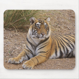 Royal Bengal Tiger sitting outside grassland, 3 Mouse Pad
