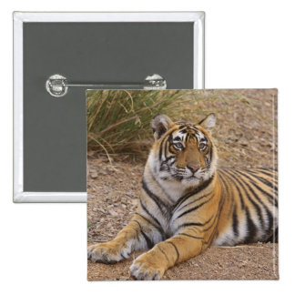 Royal Bengal Tiger sitting outside grassland, 3 Pinback Button
