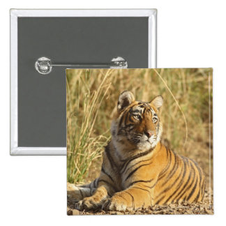 Royal Bengal Tiger sitting outside grassland, Button