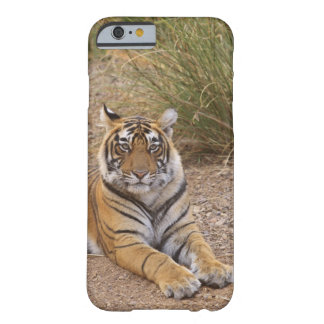 Royal bengal Tiger sitting outside grassland, Barely There iPhone 6 Case