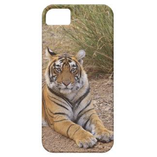 Royal bengal Tiger sitting outside grassland, iPhone SE/5/5s Case