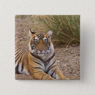 Royal bengal Tiger sitting outside grassland, Pinback Button
