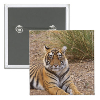 Royal bengal Tiger sitting outside grassland, Pinback Button