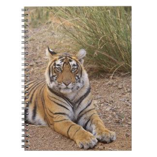 Royal bengal Tiger sitting outside grassland, Spiral Notebook