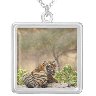 Royal Bengal Tiger snarling, Ranthambhor Silver Plated Necklace
