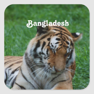 Royal Bengal Tiger Square Sticker