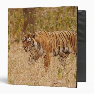 Royal Bengal Tiger walking around the bush, 3 Ring Binder