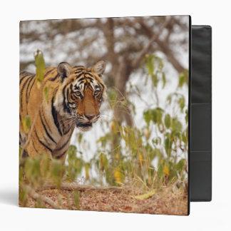 Royal Bengal Tiger walking by the lake side; 3 Ring Binder